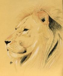 King of the Jungle by Talpy