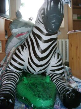 PF - Zebra being ridden by pooltoys