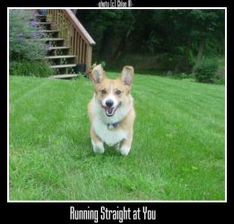 Running Straight at You by Oliver-corgi