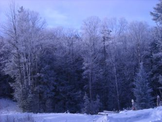 Blue Woods by RavensNevermore