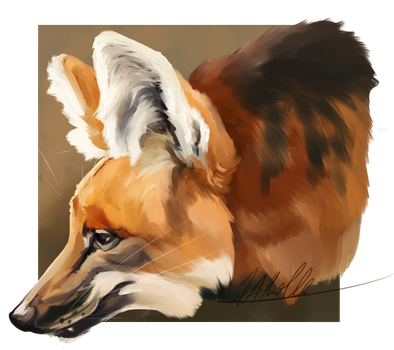 Maned wolf by BabygobooM
