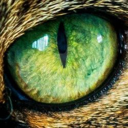 Cats eye by Perseus67