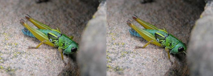 Grasshopper Stereo by timbo