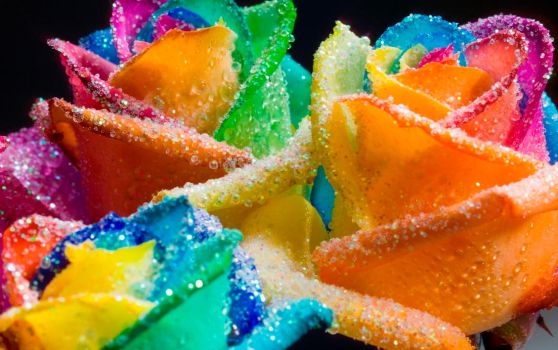 Happy Roses Rainbow Glitter by RAINBOWedROSES