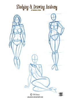 Anatomy Drawing for Artists by celaoxxx