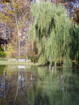 Willow and Bench by foolserrant