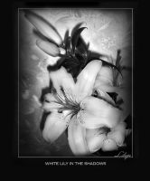 White Lily in the Shadows by Lileya