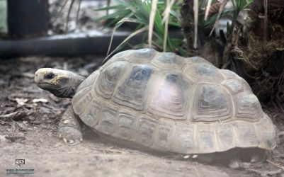 Tortoise by Quinzy
