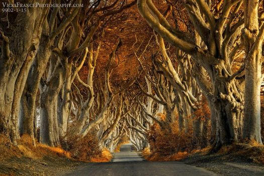 The Dark Hedges by VFrance