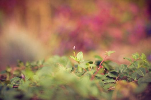 Autumn Blossom by Stichflamme