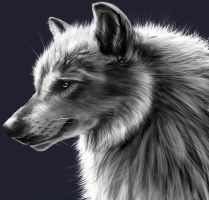 Wolf Profile by Ink-River