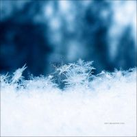 snowflakes by all17