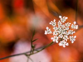 Baby's Breath? by KBeezie