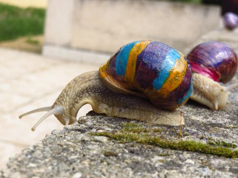 Snail art by Santian69