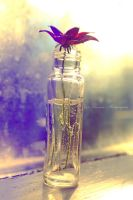 The red flower by Floreina-Photography