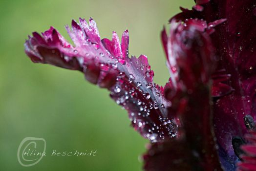 Natur2 by sandy100000951