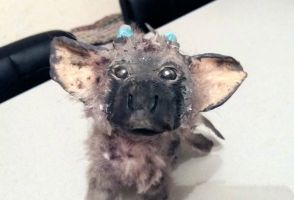 Trico art doll The Last Guardian by moondaneka