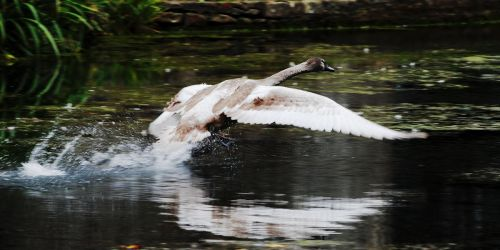 Flapping Up The Moat by Earth-Hart