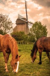 Windmill - Pitgam France by Laurent-Dubus