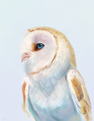 owl on a light background by AlaxendrA