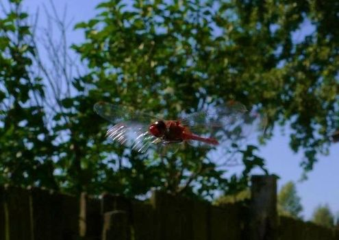 Dragonfly by PodwojneD