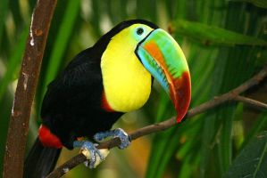 Colourful Toucan by alexgraphics1979