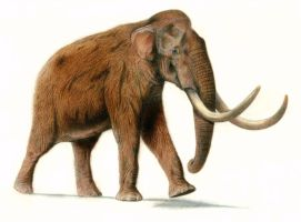 Asiatic Steppe Mammoth (Songhua River mammoth) by Jagroar