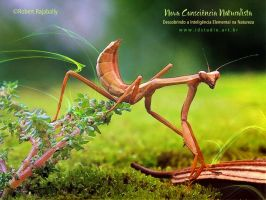 Photomanips for a New Naturalist Awareness by Rajabally