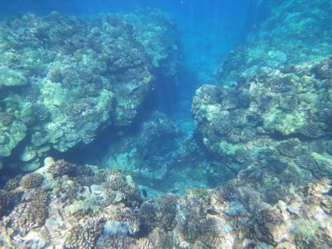 Coral Reefs by TommyGK