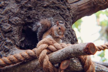 Squirrel by EveVictus