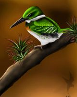 green kingfisher  by Great-Skua
