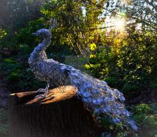 Proud Peacock by GillHolland