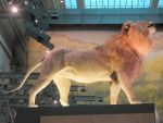 Nice Lion Mount by Skybird99