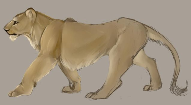 Unfinished Lioness Sketch by Mollish