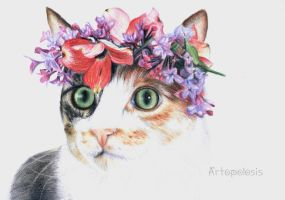 Spring cat by Anna655