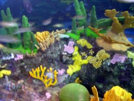 Coral at Ripley's Aquarium by dhunley