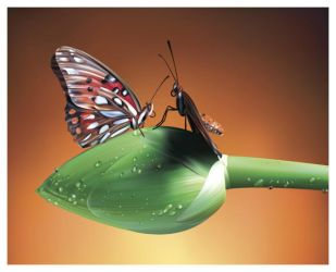 butterfly by manahan