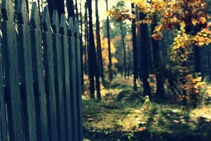 Old fence by Peterdoesphotography
