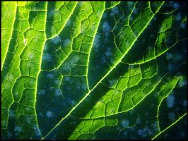 Universe within a leaf. by DecoyRobot