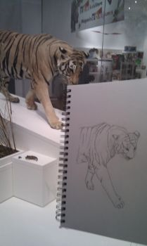 Tiger Sketch at the ROM by yulittle