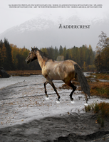Kadder Manip by Horses-Are-Real