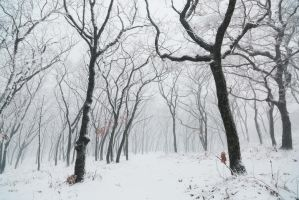 Winter landscape. Snowfall in the forest. Russia by Black-Bl00d