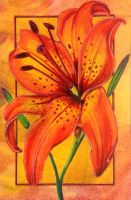 Tiger lily by DanielleMWilliams