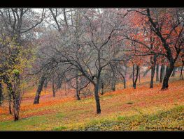 autumn in our hearts... by Iulian-dA-gallery