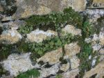 Moss Rock 1 by greenaleydis-stock