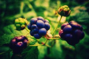 Rubus by Habos