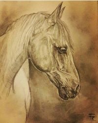 horse sketch by Yakise