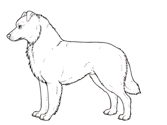 Australian shepherd colouring page by novablue