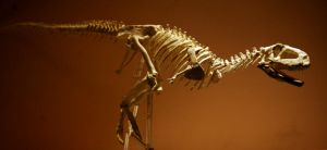 aucasaurus skeleton1 by hannay1982