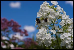 Bee's and Flowers by Roland3791